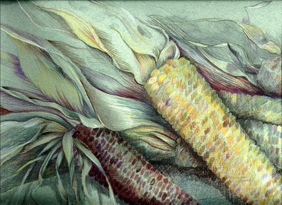 Indian Corn Drawing h Favorite Indian Corn