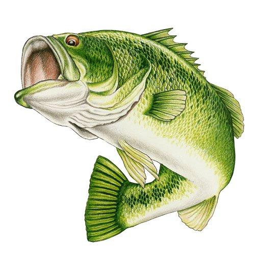 largemouth bass clip art - photo #33
