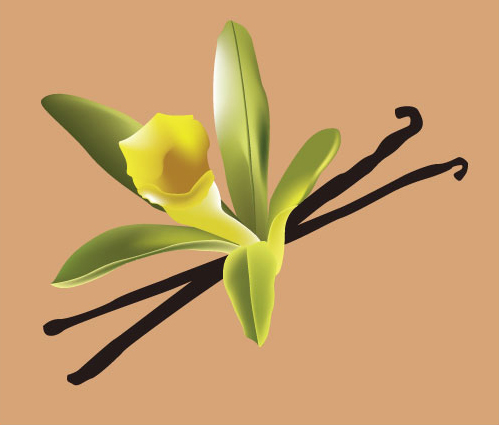 Vanilla Flower Picture on Vanilla Flower   For Use On Vanilla Flavored Muscle Building