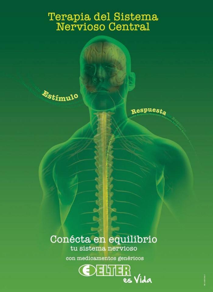 Sistema Nervioso Humano Estructuras y Funciones (con Im genes)