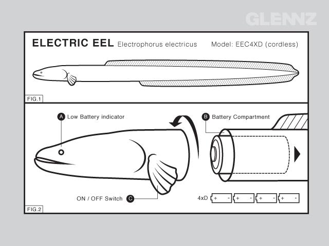 Electric Eel Diagram
