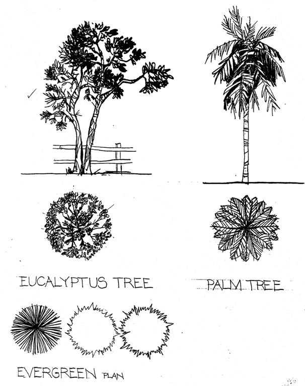 Plan And Elevation Of Trees : Miscellaneous by susan hill at coroflot