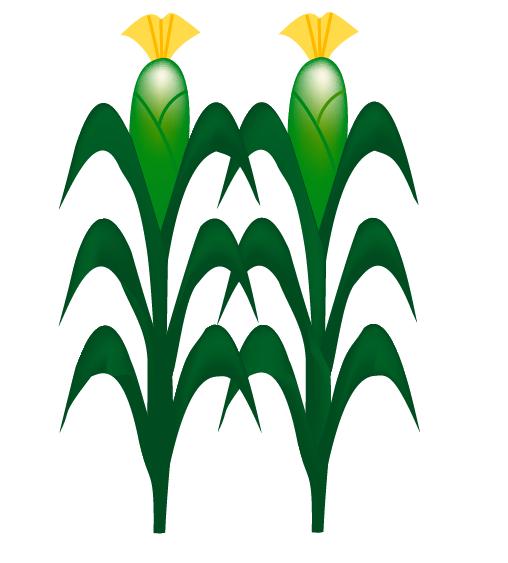 Cartoon Corn Field Corn project: to create
