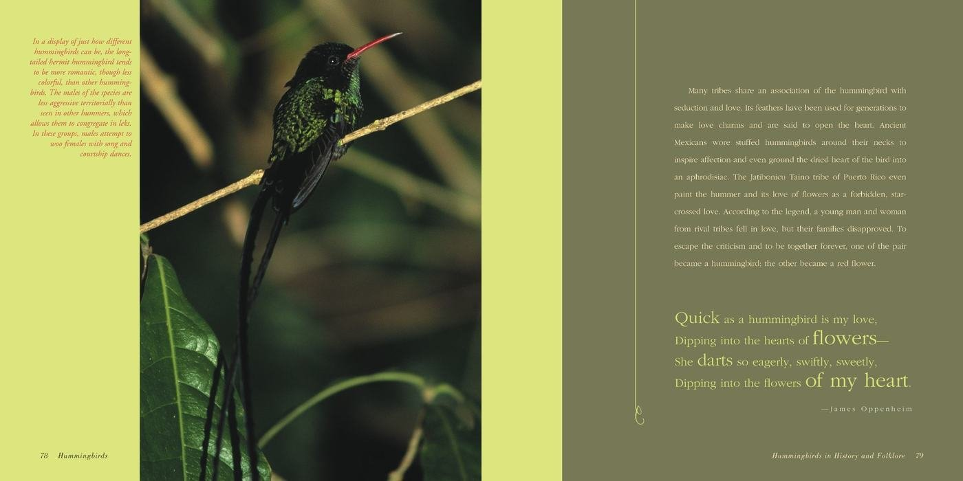 book report on the humming bird