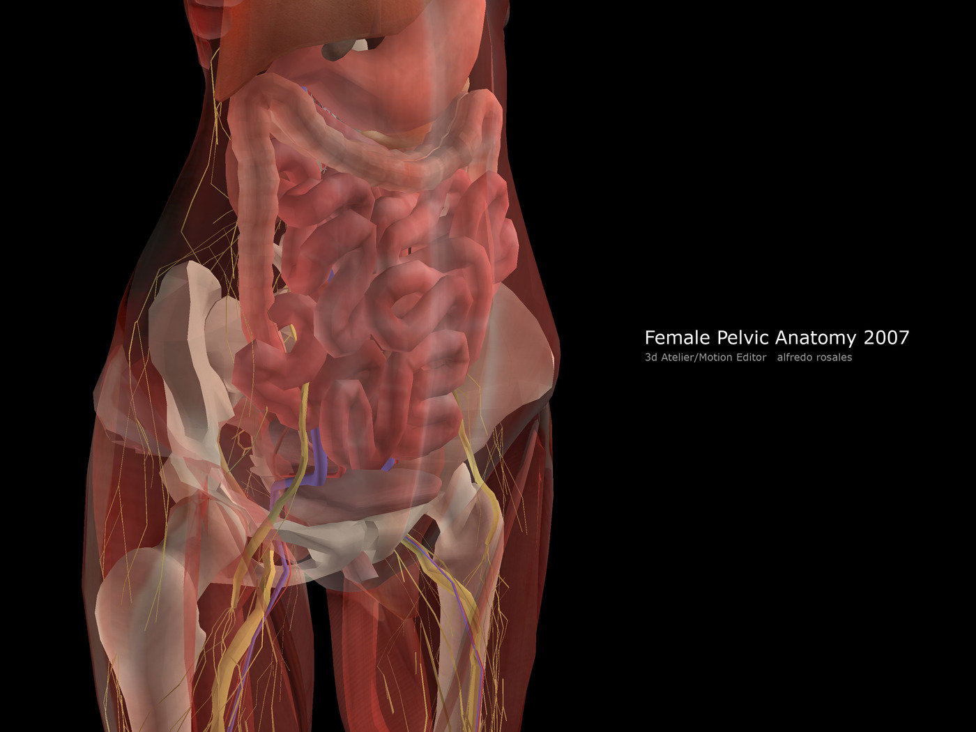 Pelvic anatomy female