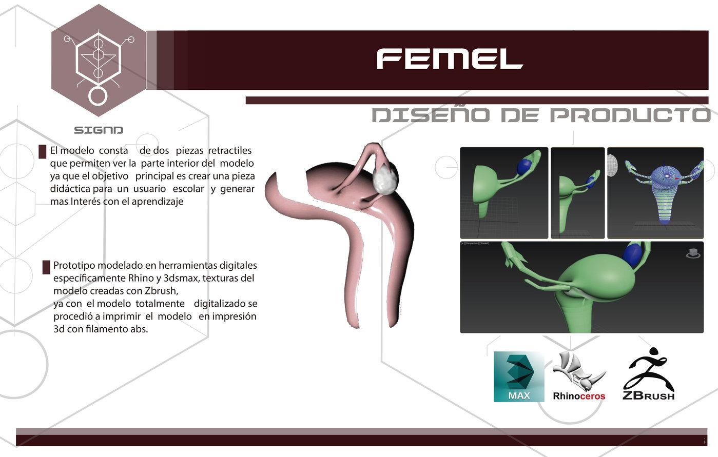 modelo anatomico aparato reproductor femenino by nicolas piñeros at ...