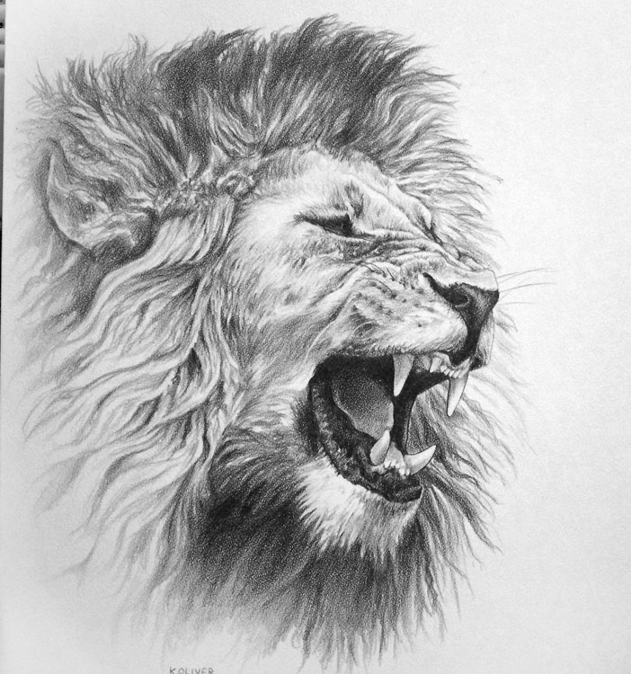 Wildlife Art By Ken Oliver At Coroflotcom