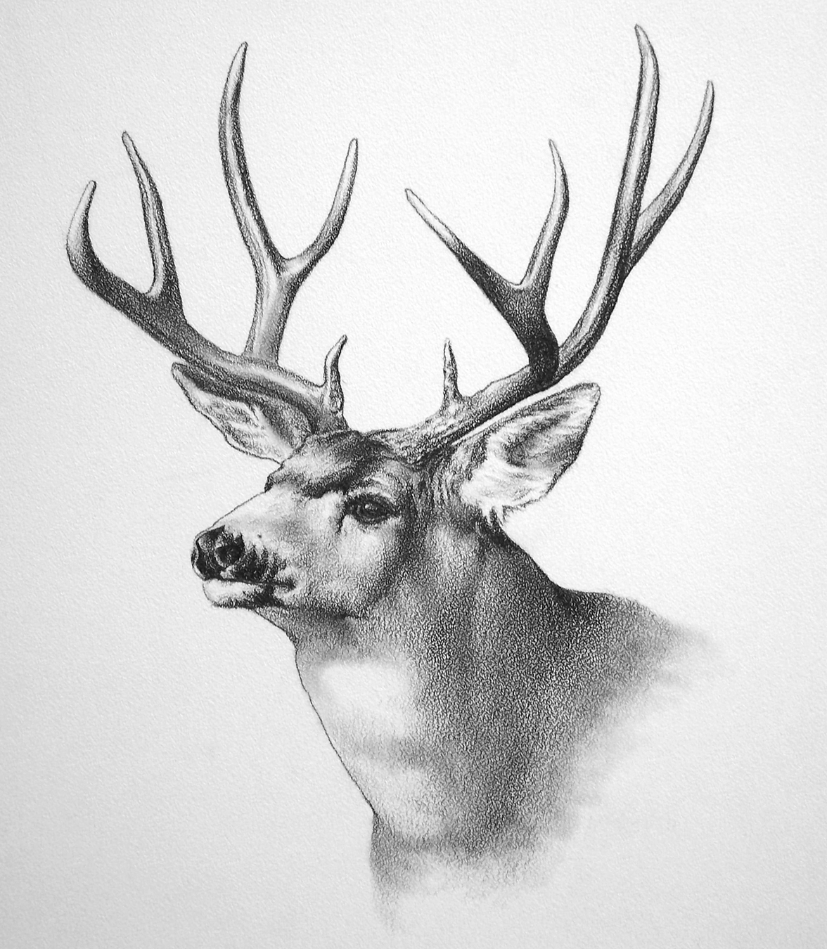 deer drawings - photo #5