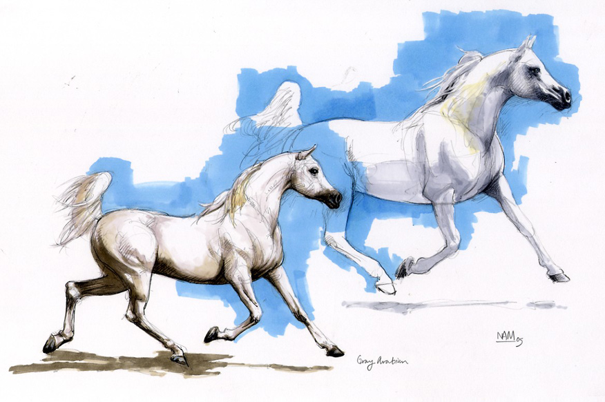 Running arabian horse drawing - photo#15