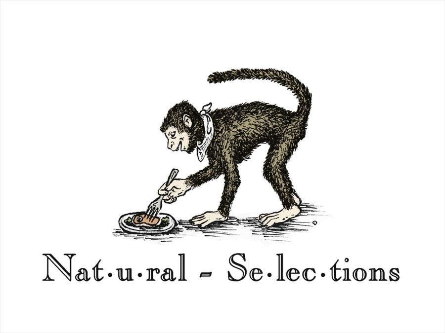 Natural Food Logo Natural Selections Logo