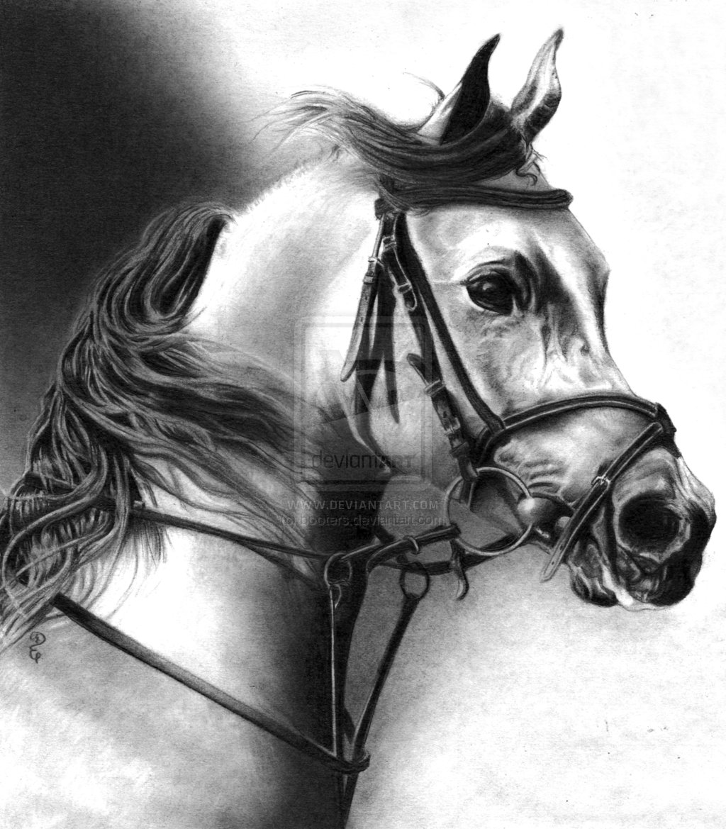 Drawing: Pencil Drawings Of Animals By Debbie Engel At Coroflot.com