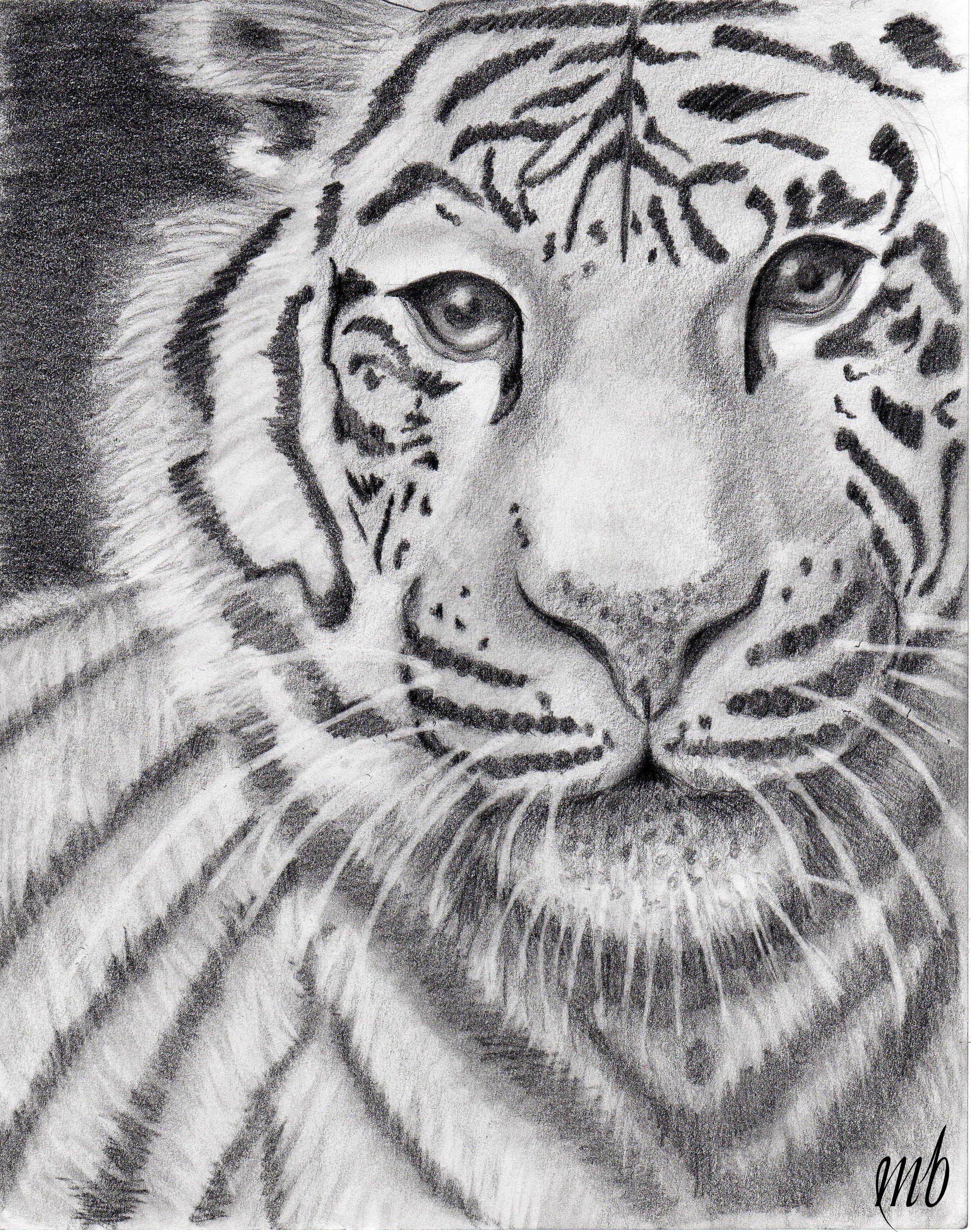 Tiger head drawing tutorial - photo#27