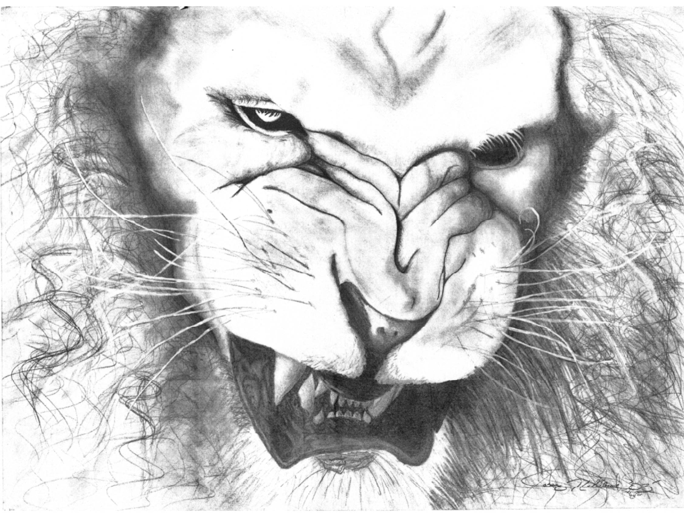Easy Lion Drawing Tumblr - photo#22