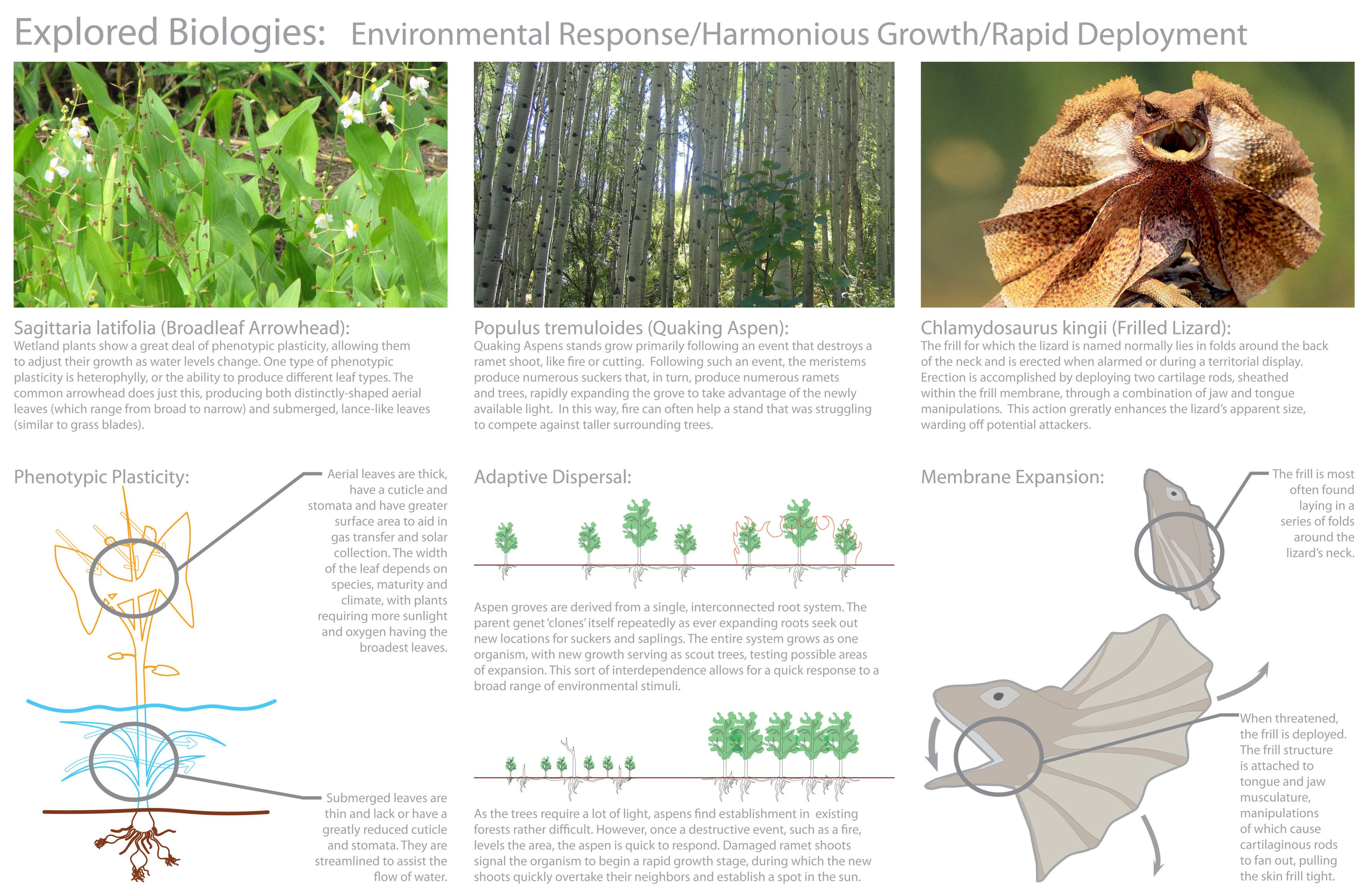 Biomimicry research paper