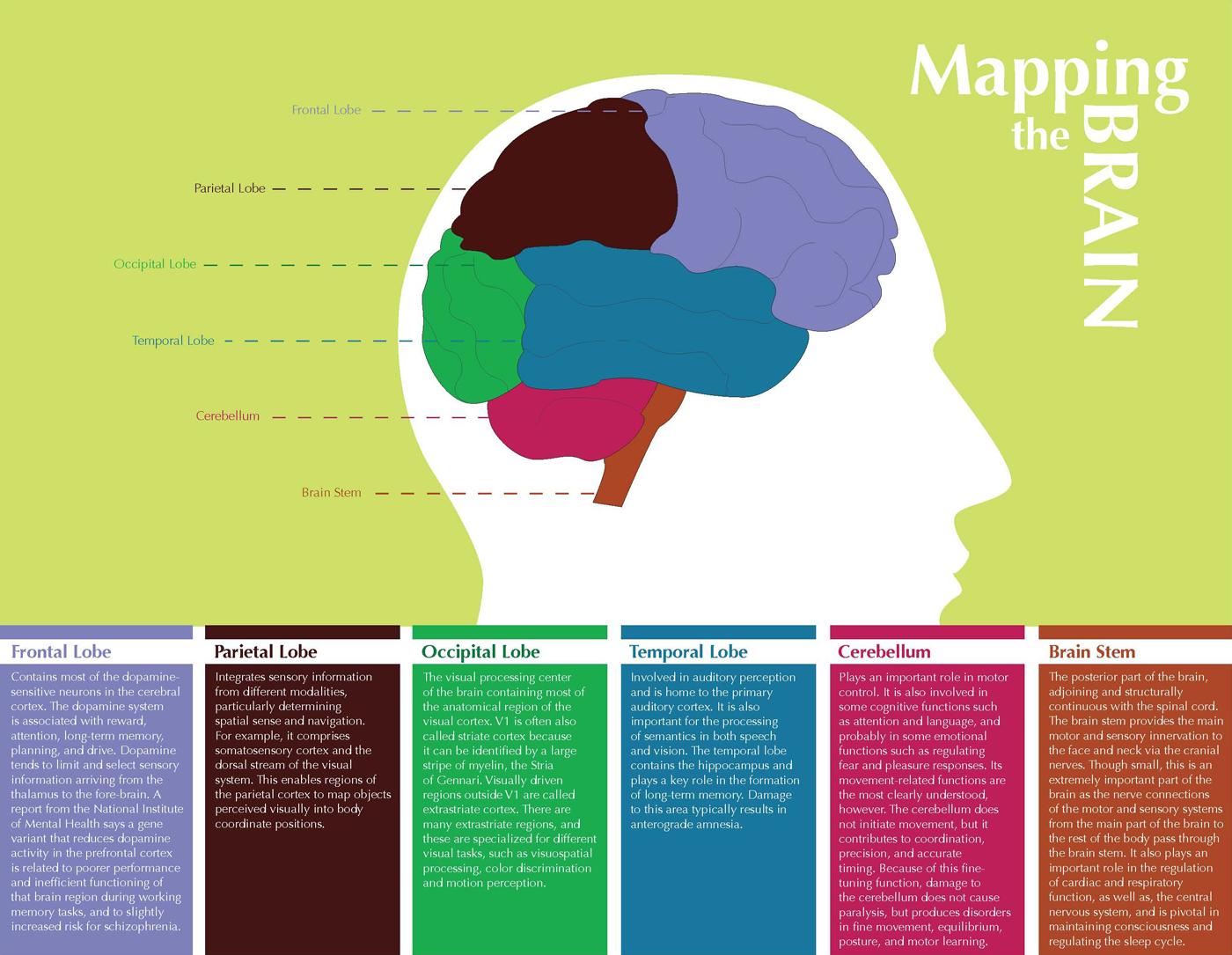 Info Graphics by Amanda Salyers at Coroflot.com