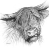 Scottish Highland Cow Commission (Pen and Ink)