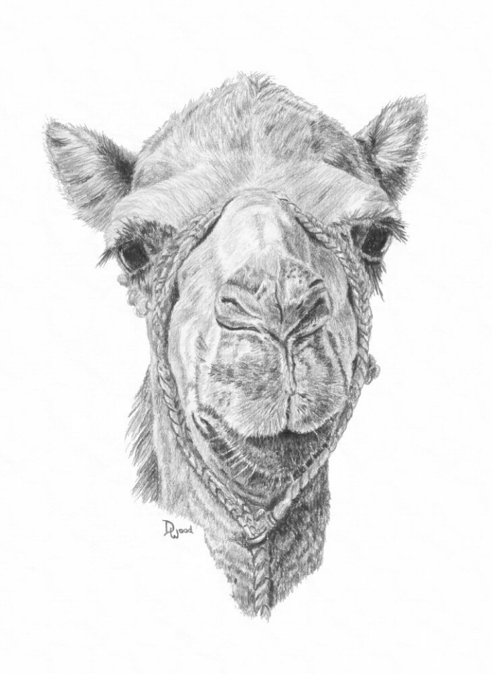 Animal Art by Denise Wood at Coroflot.com