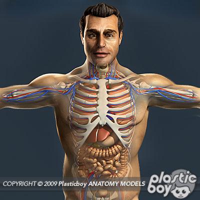Anatomy 3d Models By Guy Van Der Walt At Coroflot