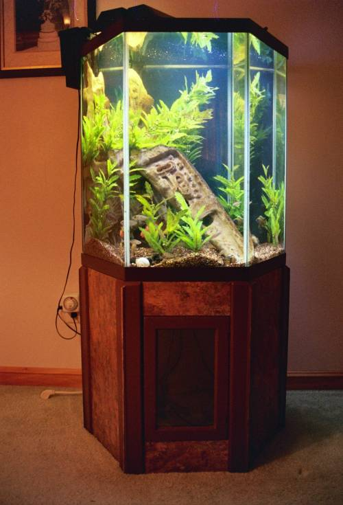 Mayan Ruin Sculpture Amp Stand For A 60 Gal Aquarium By Jim