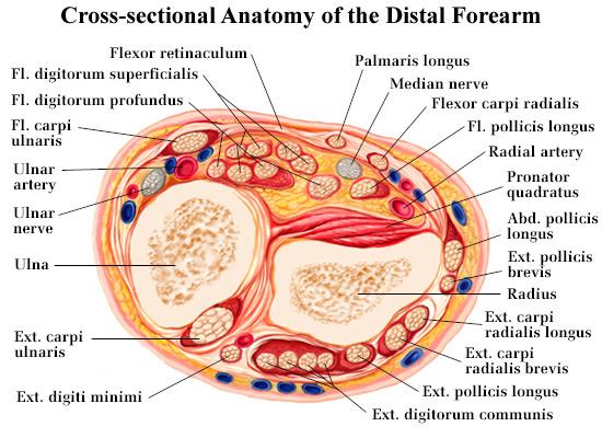 Medical Illustration by Tom Rolain at Coroflot.com