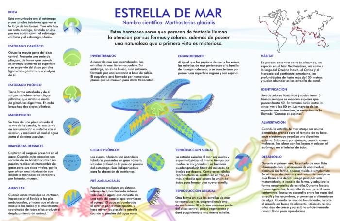 Infografía Estrella de mar by Ximena Galan at Coroflot.com