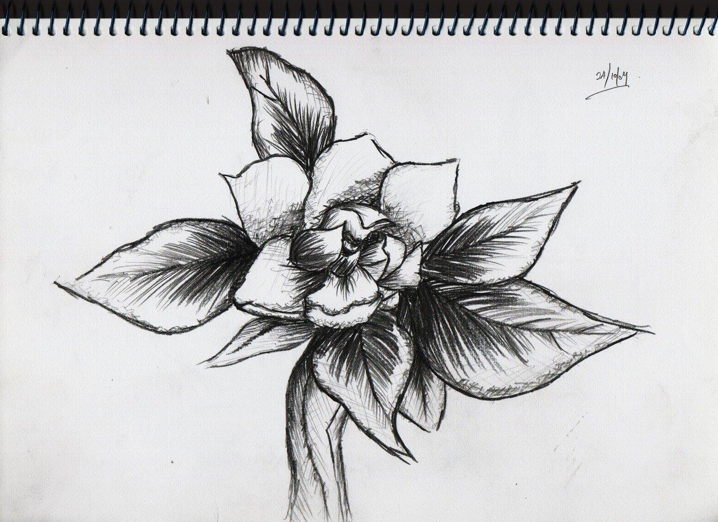 Pencil work by yingling tan at coroflot com