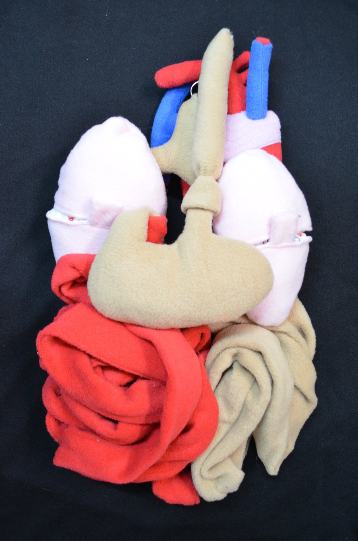 Anatomy Doll by Elysia Pascale at Coroflot.com