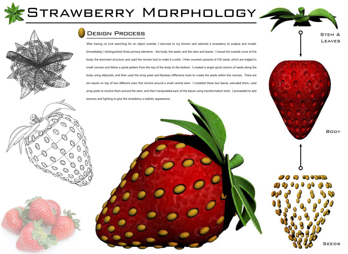 flower diagram with labeled parts strawberry morphology by john a luongo at coroflot com  strawberry morphology by john a luongo at coroflot com